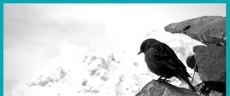 Ir al evento: Nepal año Cero. Memoria de un paraíso.