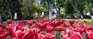 Ir al evento: Entre flores y plantas en el Botánico